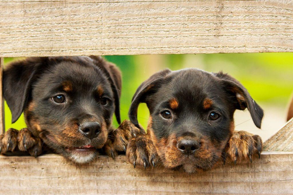 patucos para perro