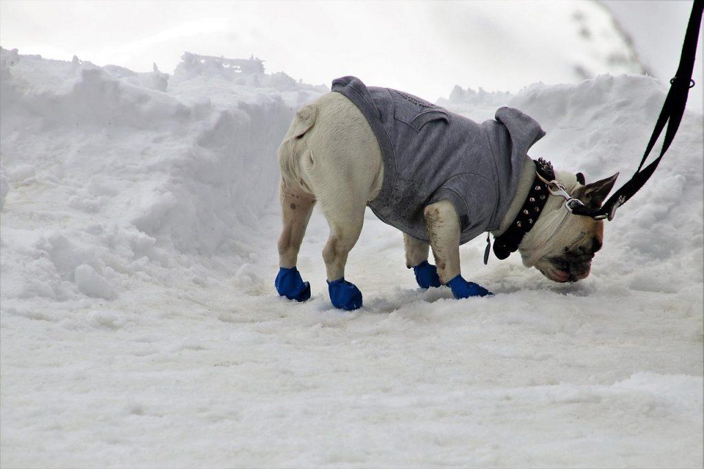 zapatos de perro para la nieve