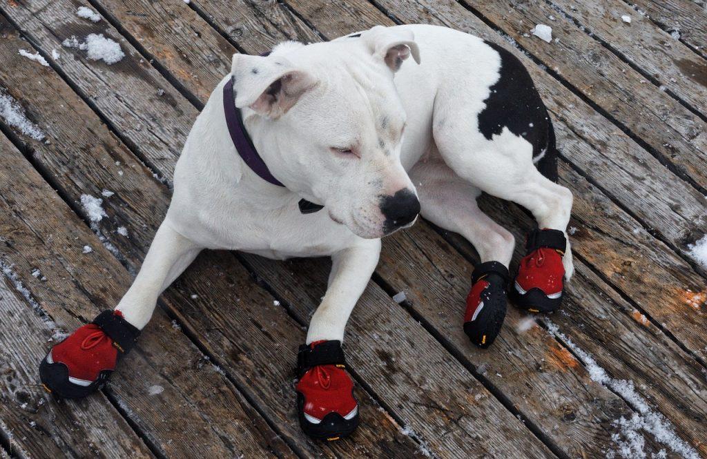botas impermeables perro