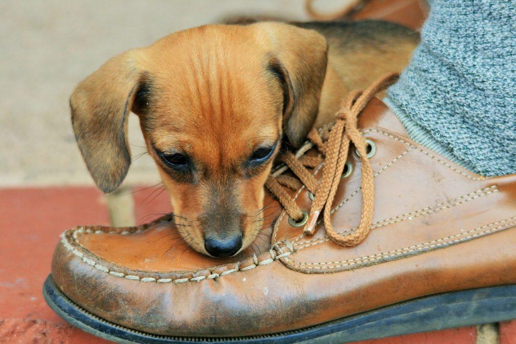 son recomendables los zapatos para perro?