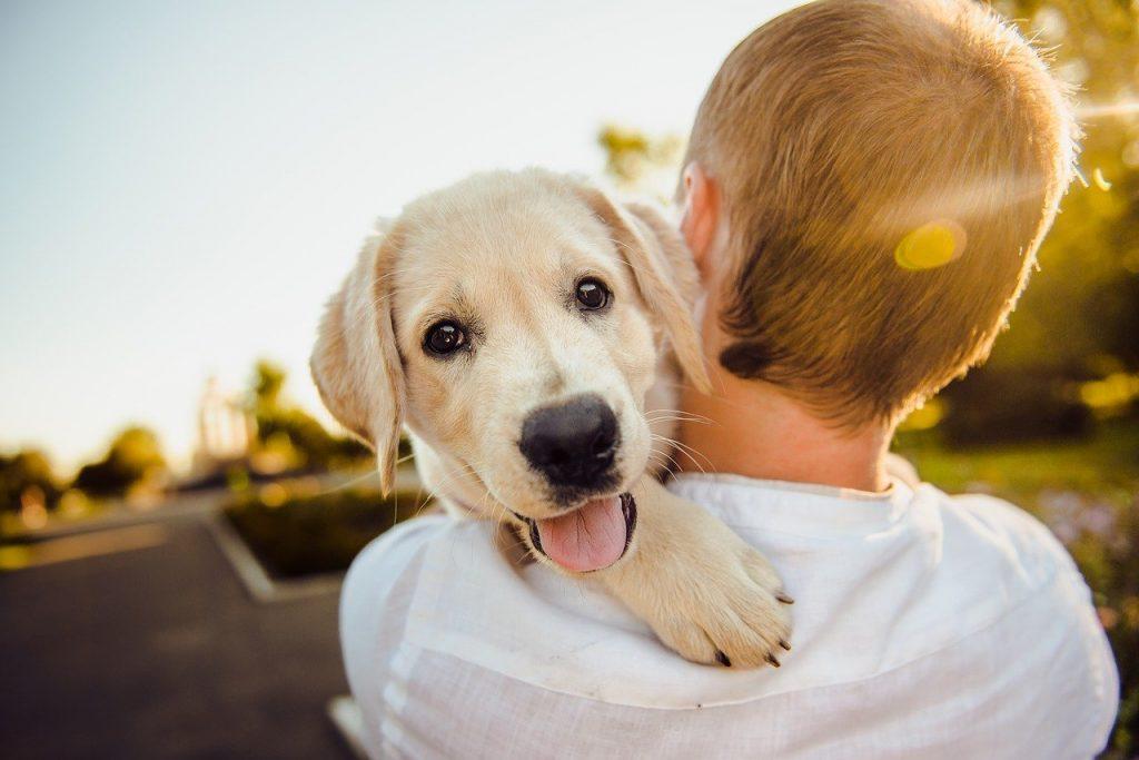 curas ante heridas de un perro