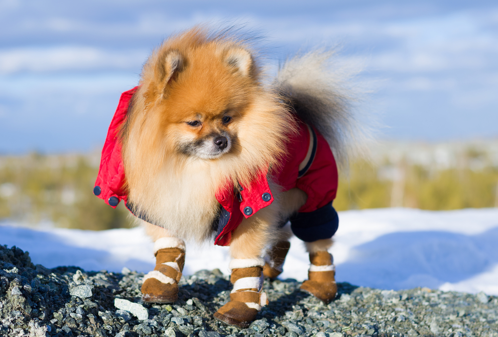 zapatos para perro de protección