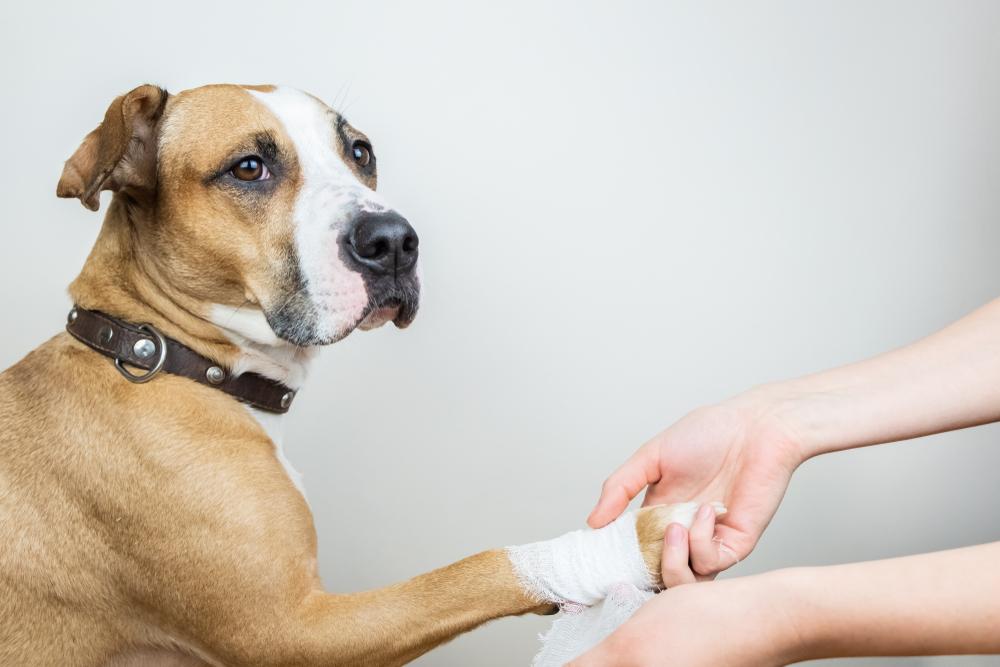 como vendar y sanar a un perro